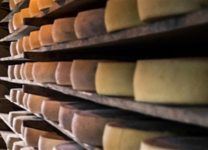 Cheese curing humidification
